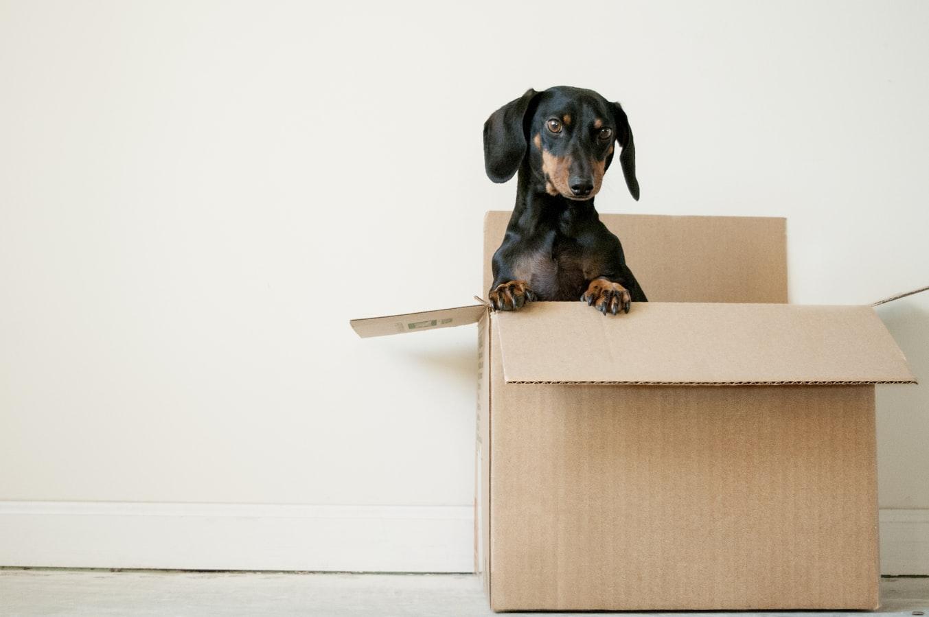 avantages de déménager au rez-de-chaussée